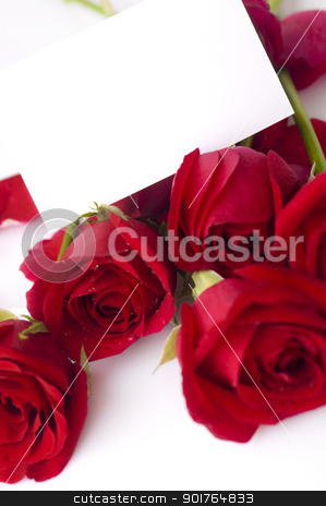 Red rose stock photo, Red rose with petals and blank gift card for text by szefei