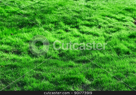 Green grass stock photo, Green spring grass. it can be used as background by Alexey Popov