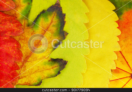 Autumn leaves stock photo, various bright colorful autumn tree leaves background by Julija Sapic