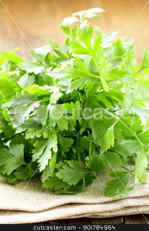 green, organic parsley  on wooden table  stock photo, green, organic parsley  on wooden table  by Olga Kriger
