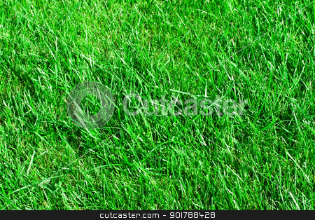 Grass stock photo,  Green lawn. it can be used as background by Alexey Popov