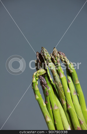 Bunch of fresh asparagus spears stock photo, Bunch of fresh green asparagus spears to be used as an ingredient in cooking isolated on grey by foto-fine-art