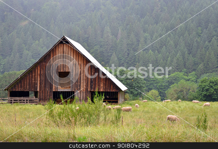 Barn and sheep stock photo, Wooden barn and grazing sheep in meadow by perlphoto