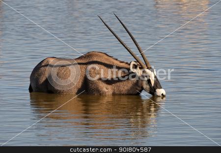 Orix (Gemsbok) drinking water stock photo, Orix (Gemsbok) drinking water, Okaukeujo waterhole, Etosha National Park, Namibia by Grobler du Preez