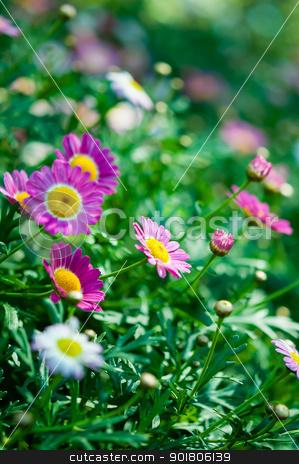 Violet flower in garden with nature light stock photo, Violet flower in garden with nature light by moggara12