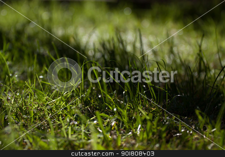 Grass in Streaks of Sun and Shadow stock photo, Grass in the late afternoon sunlight striped with shadow from nearby trees by Sarah-Jane Allen