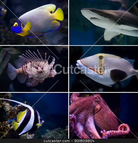 Exotic fishes stock photo, Beautiful tropical fish collection by Alexey Popov