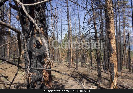 Burnt hillside with blue skies stock photo, after math of a forest fire in the high sierras. by Jeremy Baumann