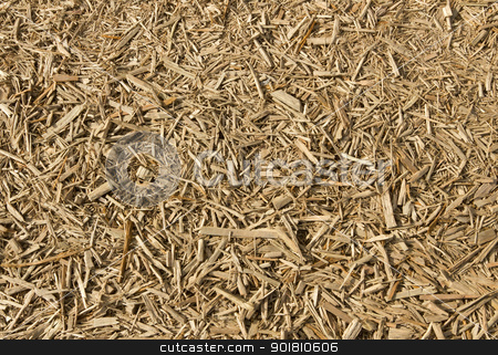 Lots of fresh wood chippings close up. stock photo, Lots of fresh wood chippings close up. by Stephen Rees