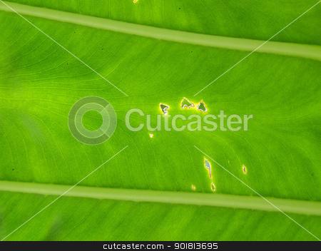 Banana leaf background stock photo, Banana leaf background by jakgree