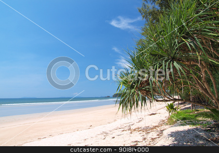 beach with palm trees   stock photo, tropical white sand beach with palm trees in Thailand by jakgree