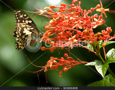 Butterfly on a flower stock photo, Butterfly on a flower by jakgree