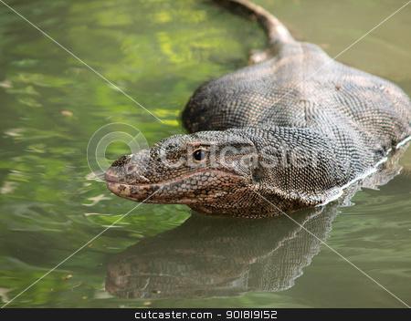 Wild varanus on the water ,Focus on the varanus eye. stock photo, Wild varanus on the water ,Focus on the varanus eye. by jakgree