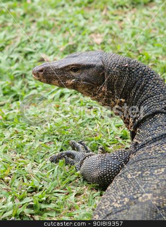 Closeup of monitor lizard - Varanus on green grass focus on the  stock photo, Closeup of monitor lizard - Varanus on green grass focus on the varanus eye. by jakgree