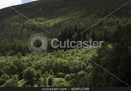 Tree Covered Hillside stock photo, Hillside with heathland and mixed woodland in summer. by TheFull360