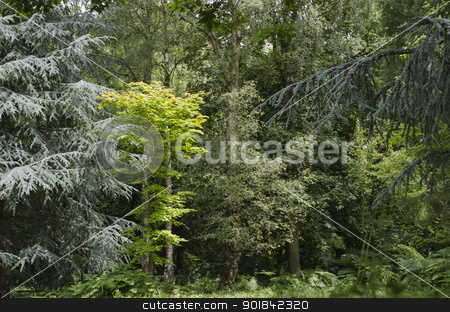 Mixed Dense Forest stock photo, Mixed forest in an English park. by TheFull360