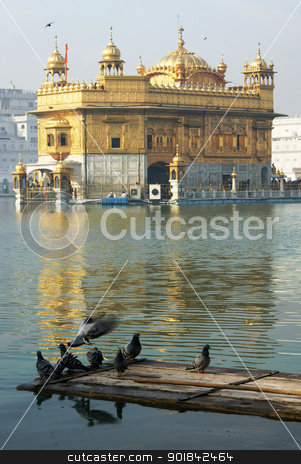 pigeons at Golden Temple, Amritsar stock photo, pigeons at the pool that surround the Goden Temple at Armitsar in India by Priyadarshi Patnaik