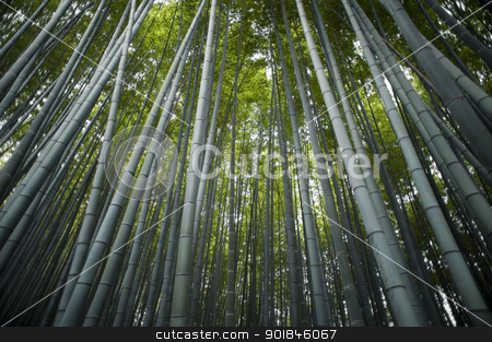 Sagano Bamboo Forest stock photo, Wide angle image looking up at forest of tall bamboo trees by Stephen Gibson