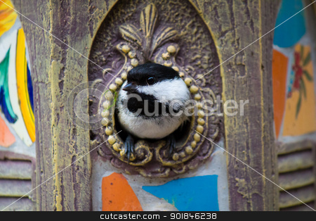 Black-capped chickadee in the birdhouse stock photo, Black-capped chickadee in the birdhouse by Click Images