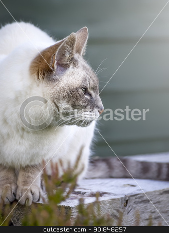 cat portrait stock photo, An image of a nice cat portrait by Markus Gann