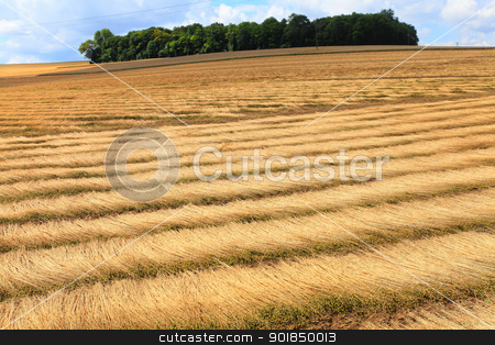 fields of flax harvested drawing lines on the floor stock photo, fields of flax harvested drawing lines on the floor by Chretien