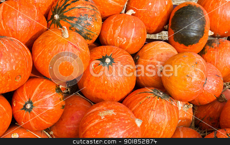 Pumpkins for sale stock photo, Pumpkins  in farm rural country field produce harvest holiday by stoonn