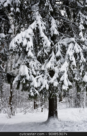 Winter stock photo, Winter forest under white snow by Alexey Popov