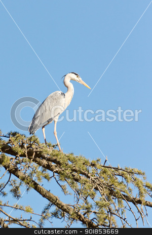 A Crane on a tree stock photo, A Crane standing tall on the branches of a tree by derejeb