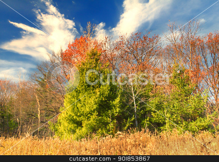 Autumn Colors stock photo, Late Autumn brings vibrant Fall colors and beautiful blue skies. by Ken Wolter