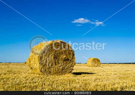 Farm field with hay bales stock photo, Mown wheat field, large round bales of hay, field of corn in the distance by Imaster