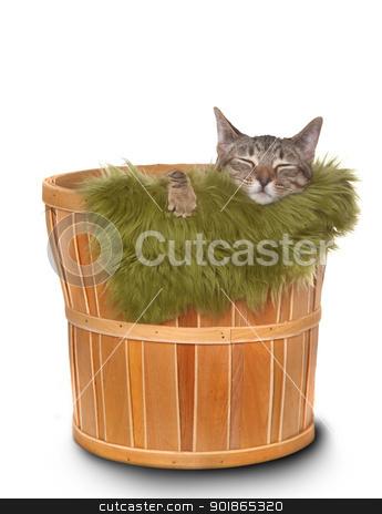 Little kitten in a basket  stock photo, Sweet Little Kitten on a White background by Katrina Brown