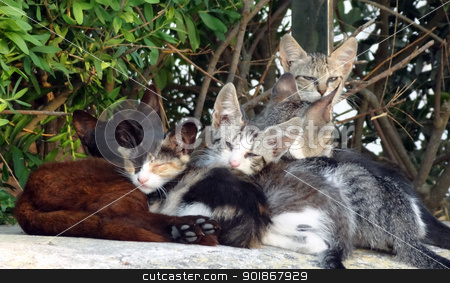 Relaxing cats stock photo, Family of small cats or kittens relaxing in the sun by Michael Travers