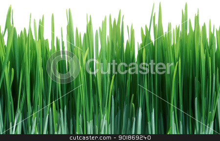 Green Grass Seamless Tile Tiling Repeating Isolated stock photo, Green Grass Close Up That Seamlessly Tiles Horizontally Isolated On White by Matt Jones