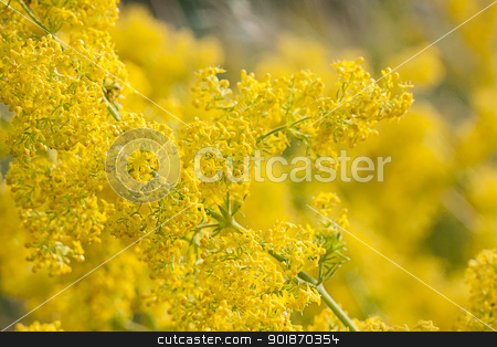 abstract yellow flowers on field stock photo, abstract yellow flowers on field by vtorous