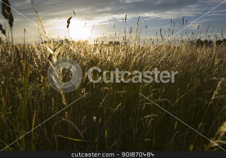 Meadow land. stock photo, Sun setting over the wild grasses. by Piotr Skubisz