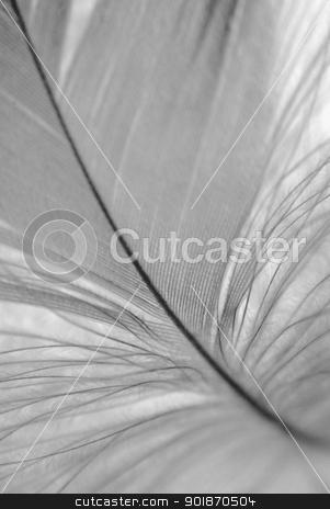 B&W feather closeup stock photo, Bird's feather detail. Black and white. Shallow DOF. by Piotr Skubisz