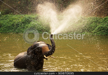 elephant  daily bath stock photo, Thai elephant  daily bath  in lumpang, Thailand by prajit48