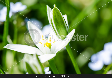 White spring flowers stock photo, White spring flowers close up by Nanisimova