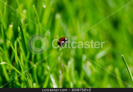 Ladybug on grass stock photo, Ladybug on green grass by Nanisimova