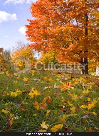 leaves in grass stock photo, leaves in grass by Dunning Adam Kyle