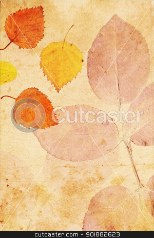 Beautiful vintage background with autumnal leaves  stock photo, Beautiful vintage background with autumnal close up leaves  by Juliet Photography