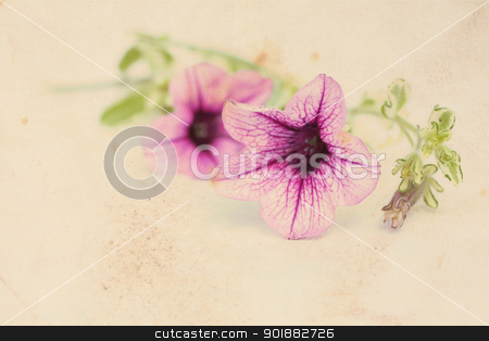 Pretty floral vintage background with surfinia flowers  stock photo, Pretty floral vintage background with pink surfinia flowers  by Juliet Photography