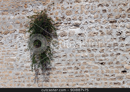 Plant growing on old wall stock photo, Plant growing on old wall with textured surface and copy space. by Martin Crowdy