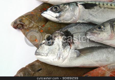 Various fish stock photo, Various fish by photography33