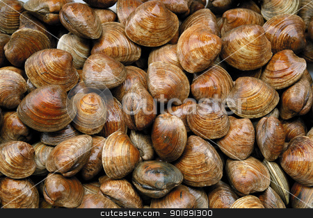 Shellfish stock photo, Shellfish by photography33