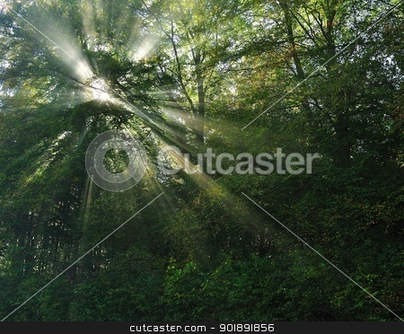 Sun rays in forest stock photo, Sun rays in morning fog in the forest by Ondrej Vladyka