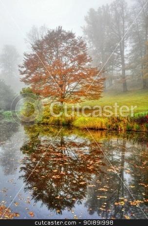 Autumn tree stock photo, Autumn tree near the lake by Ondrej Vladyka