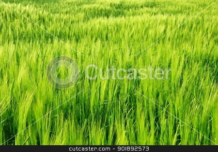 Fresh field stock photo, Green fresh field by Ondrej Vladyka