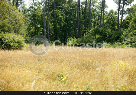 Secluded field stock photo, Secluded field by photography33