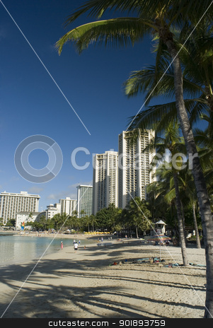 Waikiki beachfront stock photo, waikiki beach front palm trees and hotels, Honolulu, Hawaii by Stephen Gibson